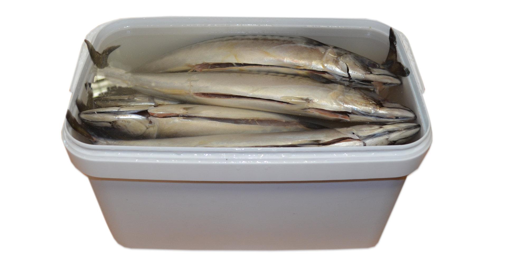 Salzmakrele in Eimer 7,5 liter.